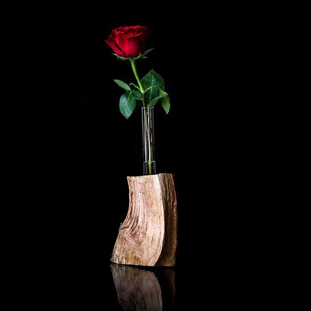 Flower, Vase, Leaf, Still Life, Shell, Rose, Plant, Bud