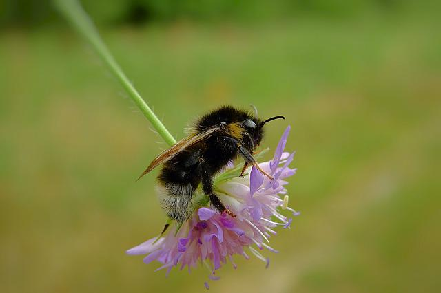 Insects, Meadow, Bumblebee, Flower, Nature, Macro