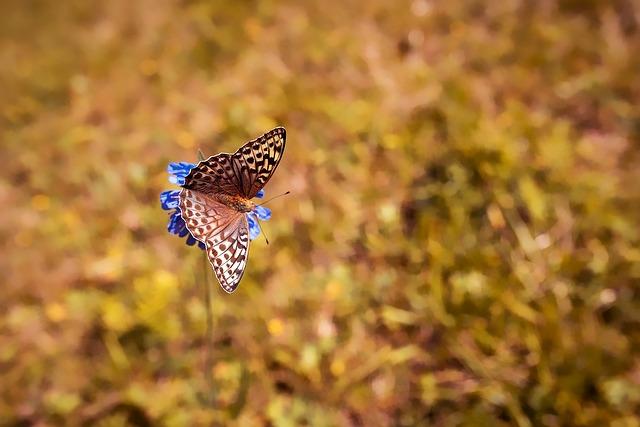 Butterfly, Butterflies, Edelfalter, Nature, Flower