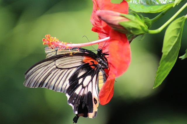Butterfly, Nature, Insect, Flower