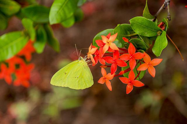 Nature, Flower, Plant, Leaf, Garden, Butterfly