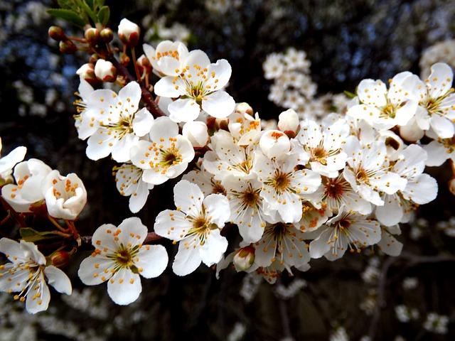 Flower, White Spring, Casey