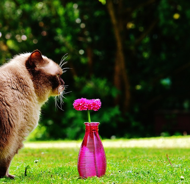 Vase, Glass, Flower, Decoration, Pink, Cat, Curious