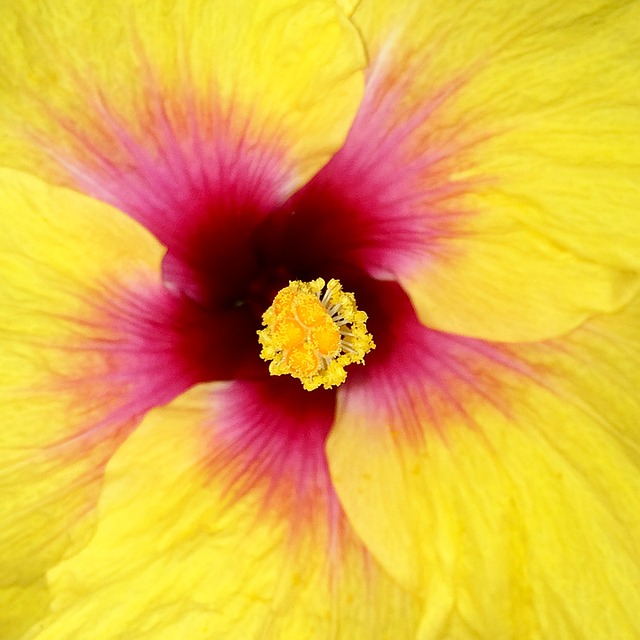 Macro, Tropical Flower, Flower Close-up, Tulum, Mexico