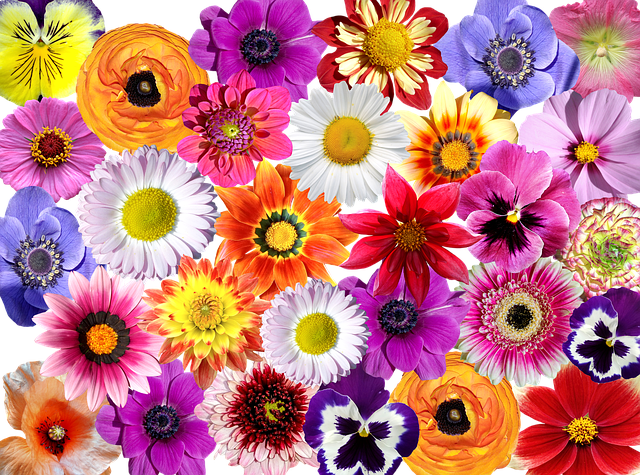Flowers, Flower Colorful, Flower, Nature, Garden
