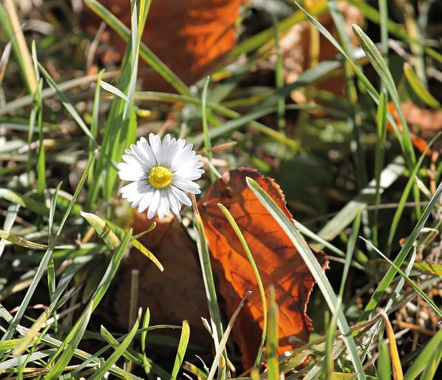Daisy, Autumn, Fall Foliage, Nature, Flower, Blossom