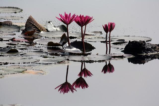 Beautiful, Bird, Daylight, Flower, Lake, Nature