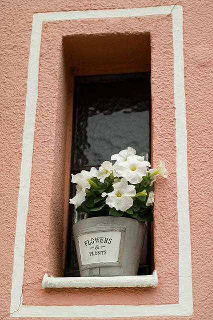 Window, Flowers, Home, Facade, Window Sill, Flower