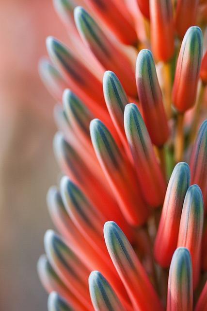 Flower, Plant, Tender, Fine, Blossom, Bloom, Orange