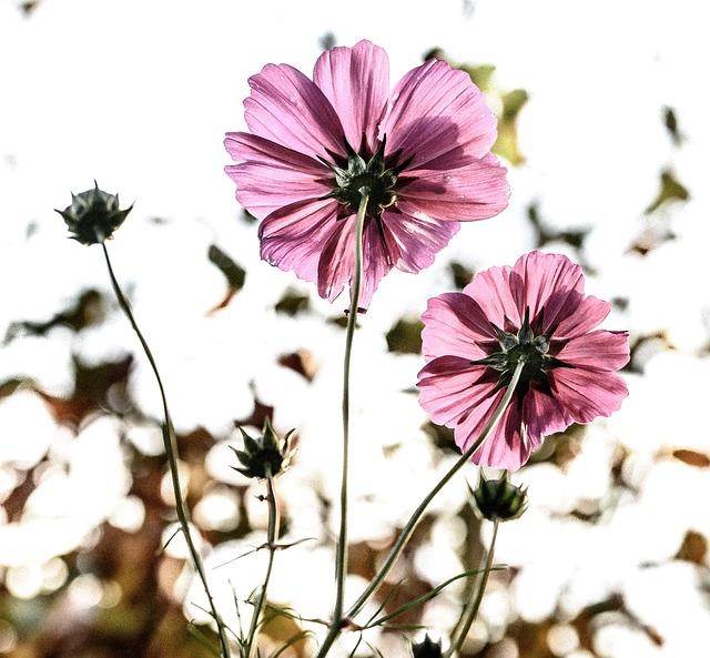 Flowers, Flower, Fiore, Back Light