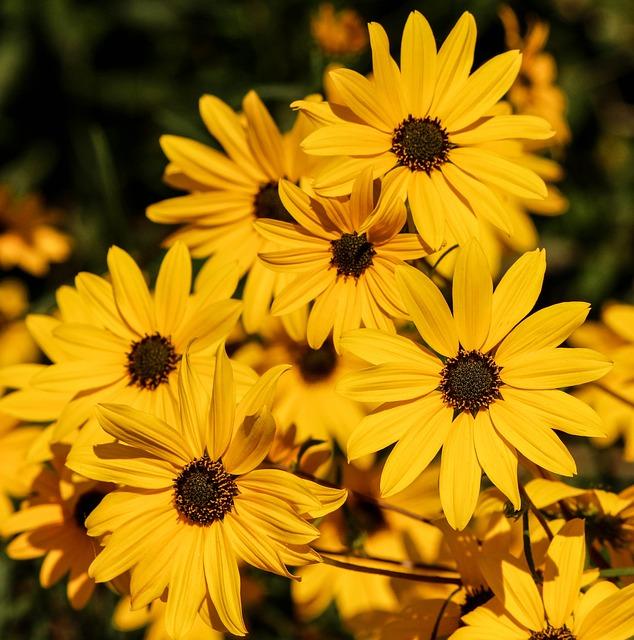 Daisy, Flower, Blossom, Bloom, Floral, Bright, Flora