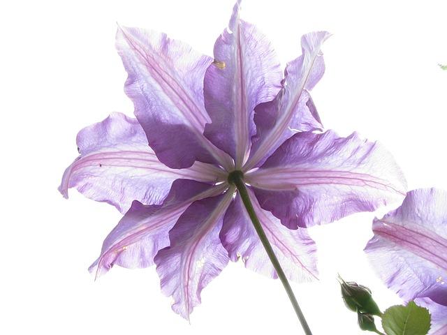 Flower, Nature, Flora, Garden