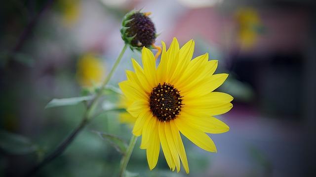Nature, Flower, Flora, Summer, Leaf