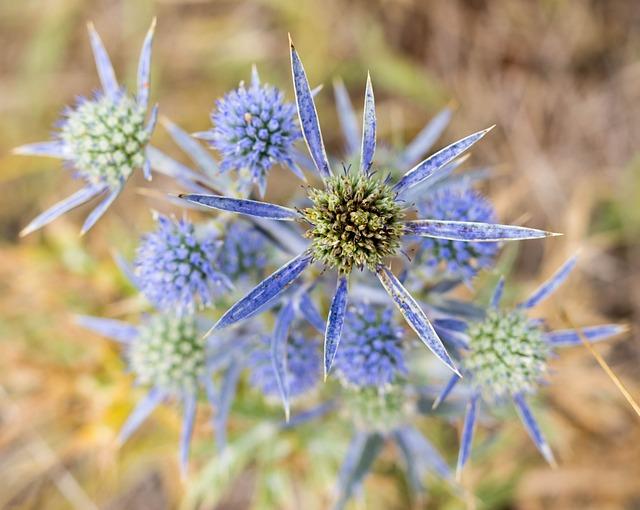 Nature, Flora, Flower, Spine, Thistle