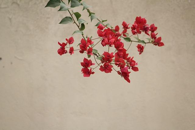 Flower, Red, Nature, Floral, Plant, Summer, Garden