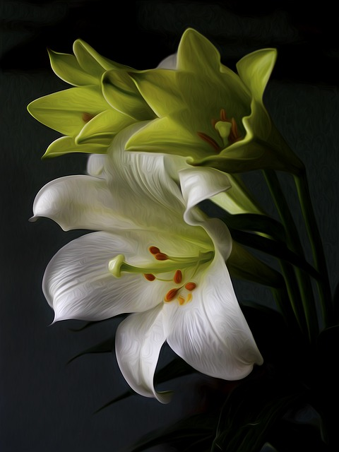 Lily, Flower, Plant, Bloom, Blossom, Nature, Floral