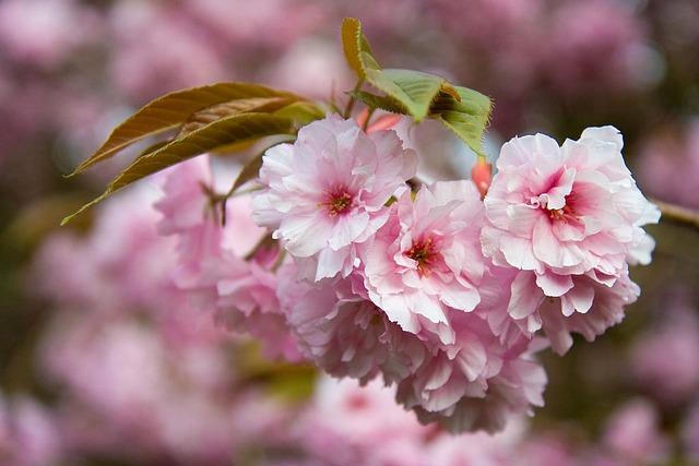 Flower, Pink, Petals, Tree, Spring, Floral, Flora