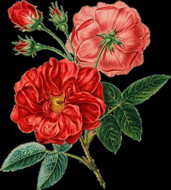 Red, Rose, Vintage, Botanical, Flower, Floral, Leaves