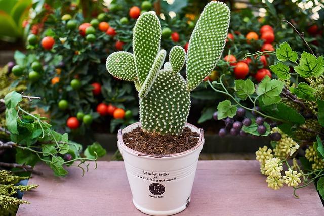 Flowerpot, Flower, Cactus, Dea, Plant, Garden
