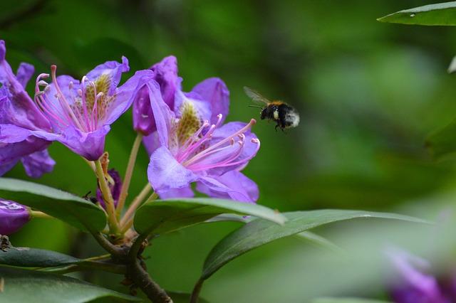 Flower, Pink, Garden, Spring, Plant, Flowers