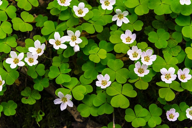 Flower, Flowers, Bloom, White, Green, Forest