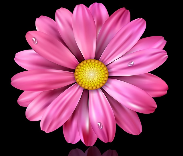 Flower, Nature, Plant, Petal, Black Background, Flowers