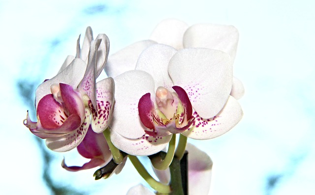 Orchid, Flowers, Flower, Plant, Orchideenblüte, Close