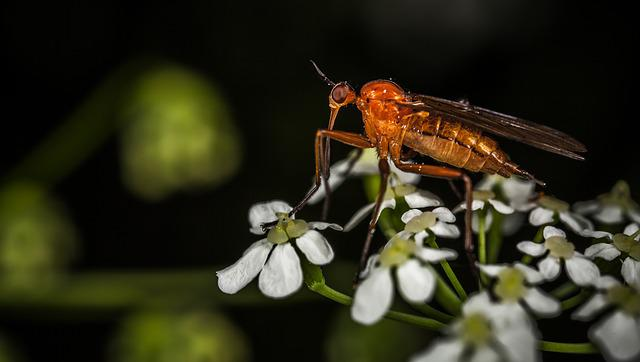 Insect, Nature, No One, Fly, Outdoors, Macro, Flower