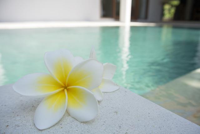 Flower, Frangipani, Pool, Tropical, Exotic, Bali, Aroma