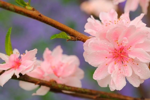 Flower, Nature, Flora, Garden, Petal