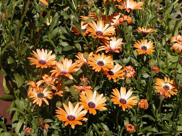 Flower, Summer, Garden, Flora, Nature, Petal, Blooming