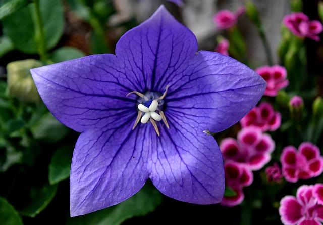 Flower, Summer, Nature, Summer Flower, Garden, Blossom