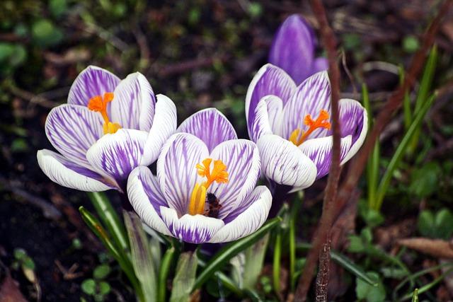 Nature, Flower, Plant, Season, Garden, Walk In The Park