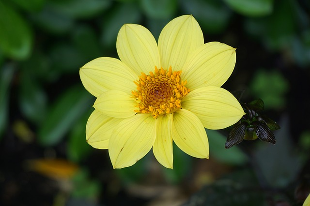 Flower, Flora, Yellow Flower, Botany, Garden, Petal