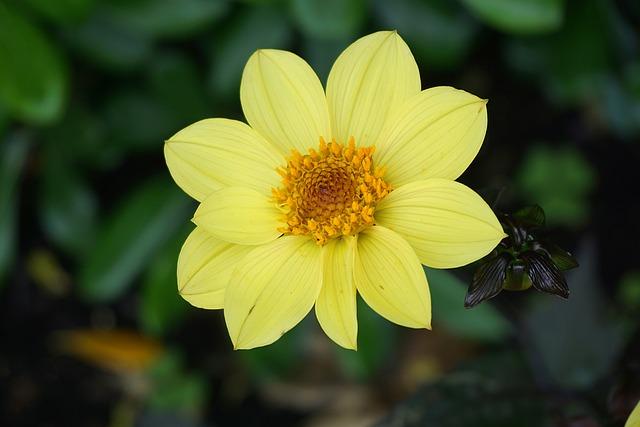 Flower, Flora, Yellow Flower, Botany, Garden, Petal