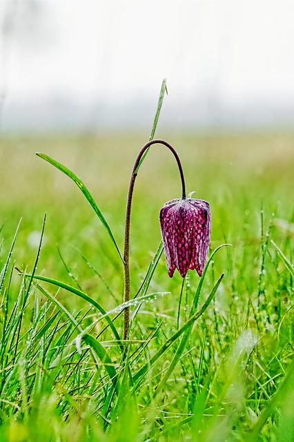 Nature, Grass, Field, Plant, Flower