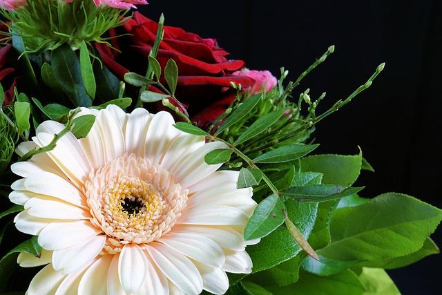 Gerbera, Flower, Nature, Plant, Leaf, Summer, Green