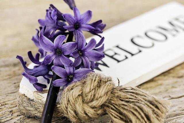Hyacinth, Blue, Flower, Fragrant Flower, Fragrant