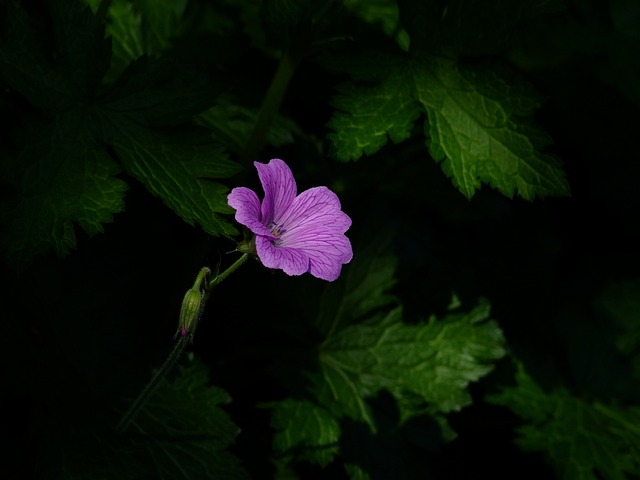 Flower, Blossom, Bloom, In The Shadow, Shadowy, Lonely