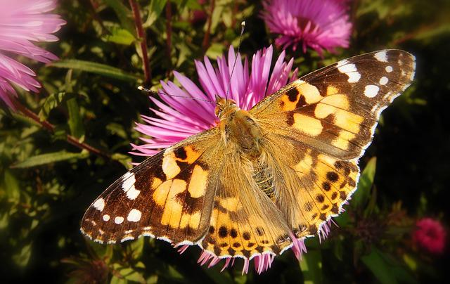Nature, Butterfly Day, Flower, Insect, Plant, Animals
