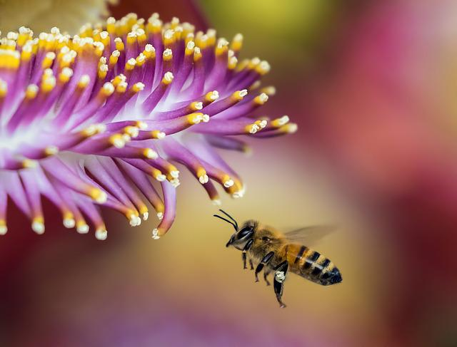 Bee, Blur, Close-up, Flora, Flower, Honeybee, Insect