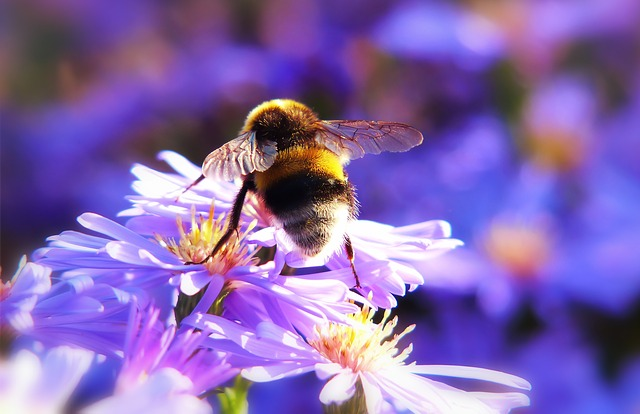 Bumblebee Gas, Insect, Flower, Apiformes, Garden