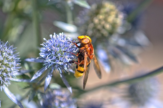 Insect, Hoverfly, Flower