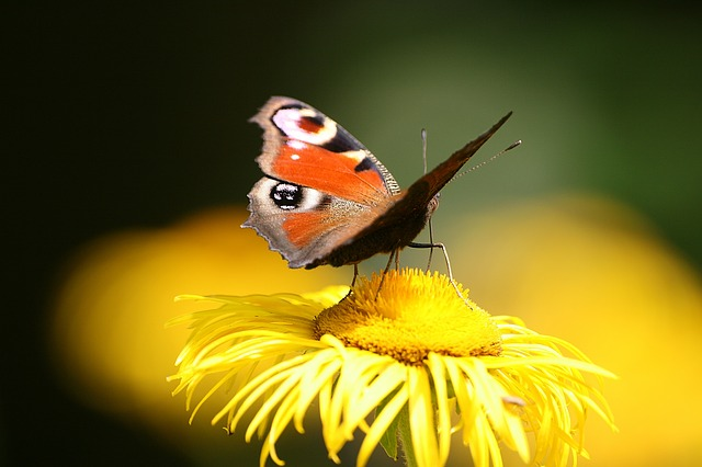 Nature, Insect, Butterfly Day, Animals, Flower, No One