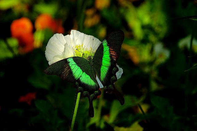 Nature, Flower, Plant, Butterfly, Bright, Insect