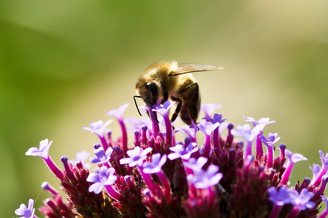 Nature, Bee, Flower, Insect, Summer