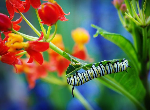 Insect, Nature, Flower, Garden, Flora, Leaf, Outdoors