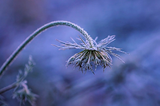 Frost, Winters, Flower, Blue, Nature, Leaf