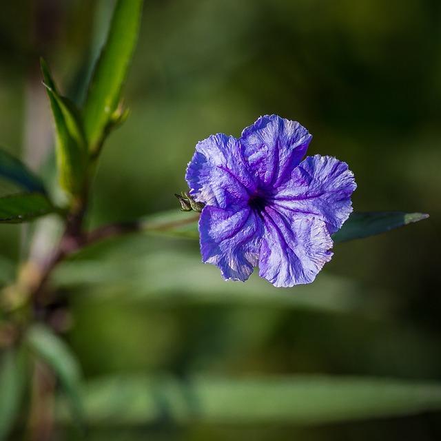 Flower, Flora, Nature, Leaf, Petal