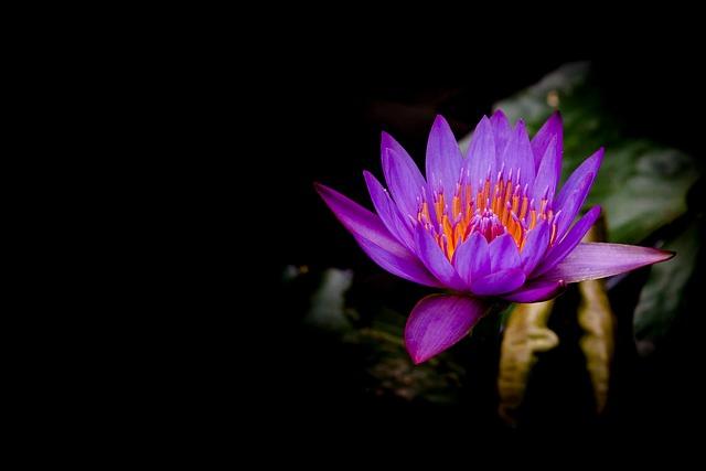 Nature, Plant, Flower, Leaf, Beautiful, Summer, Light